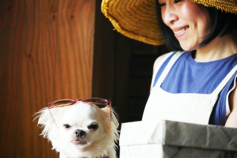 愛犬用 ゴーヤチャンプルー 水野雪絵