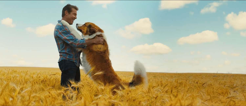 【映画】おうち時間におすすめ♪深い愛がわんちゃんの魂を動かす感動の転生物語『僕のワンダフル・ジャーニー』
