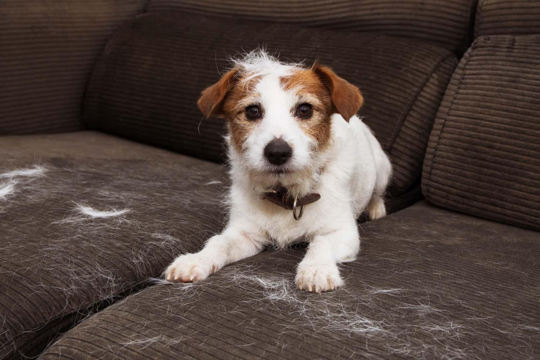 【獣医師監修】犬の抜け毛がひどい!原因や考えられる病気について解説