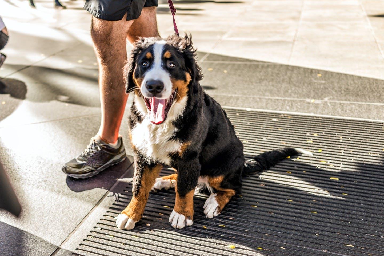 【獣医師監修】犬の熱中症とは?症状やなりやすい犬の特徴を解説