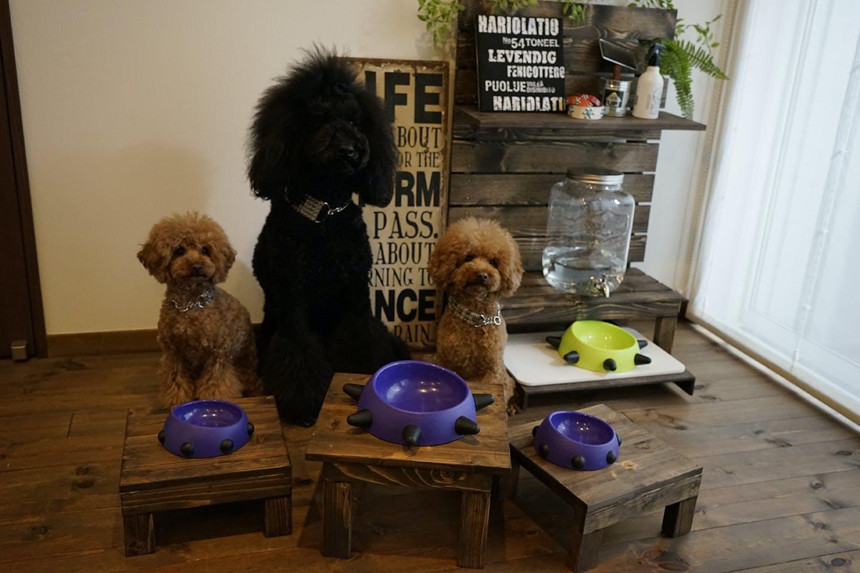 愛犬と一緒にDIY!わんちゃん用 「ごはんテーブル」を作ろう!【Dog & DIY】