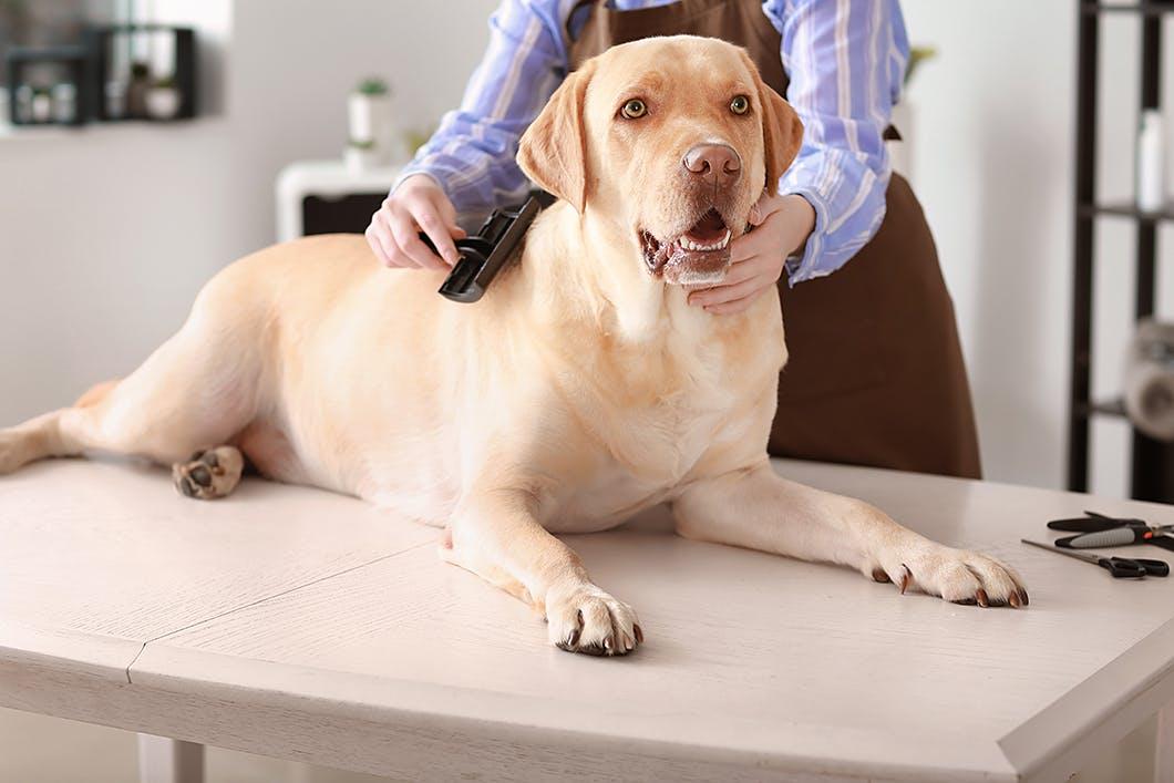 プロが教える!愛犬がブラッシングを嫌がる原因やその対処法
