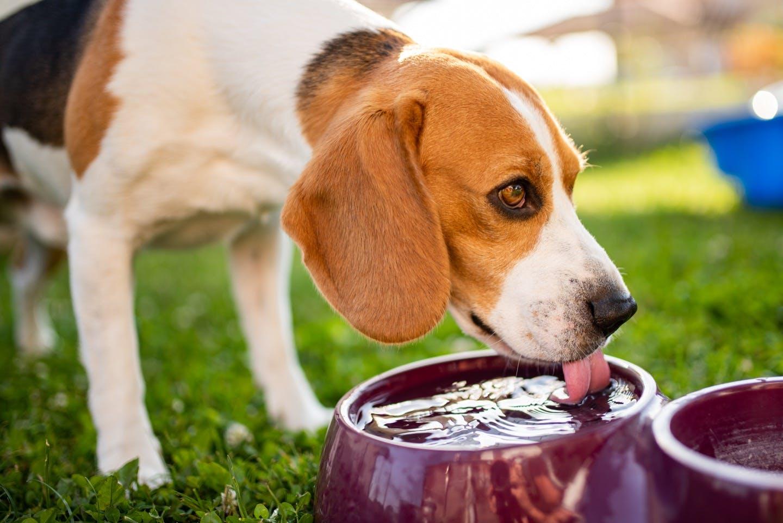 犬に必要な1日の飲水量は?多い・少ないときの注意点・対処法も