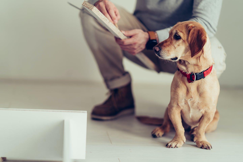 プロに学ぶ!リフォームプラン② 夫婦と愛犬が暮らす家