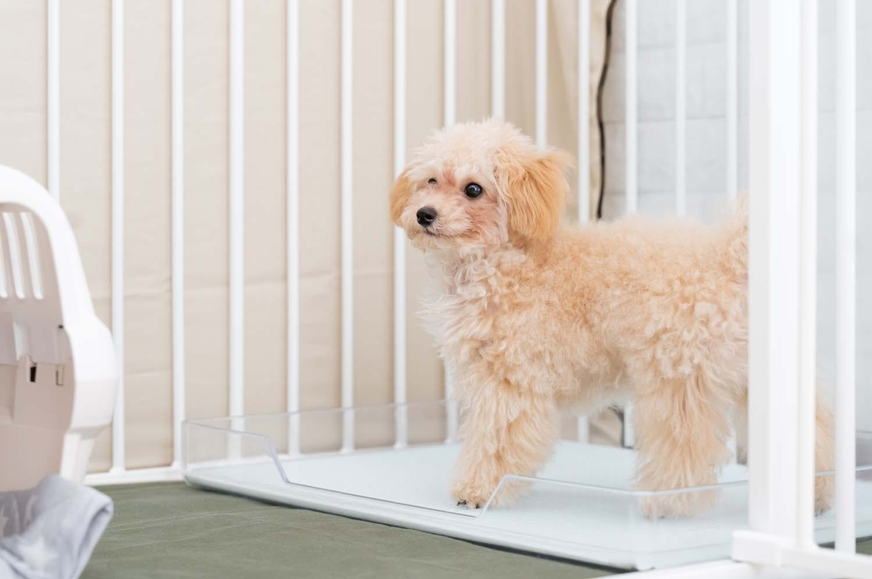 愛犬に最適なトイレトレーとは?トイレトレーを選ぶポイントを解説