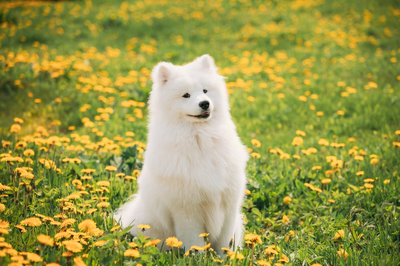 犬を飼うなら知っておくべき法律「動物愛護管理法」とは