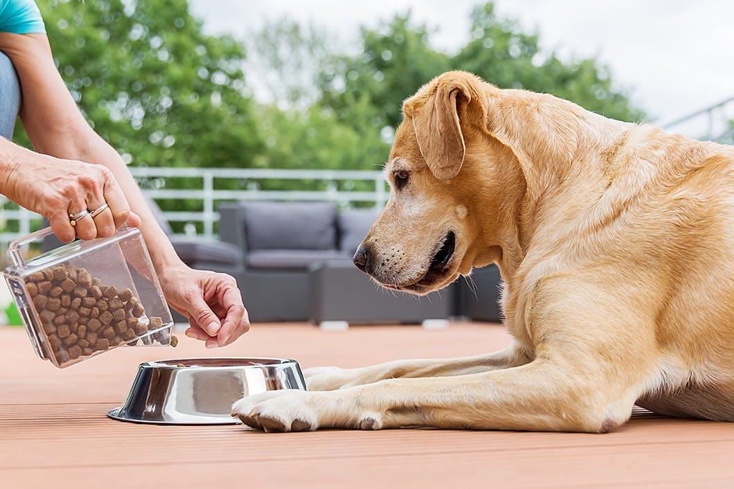 犬に食事をおあずけさせる「待て」はもう古い? 正しい食事の与え方
