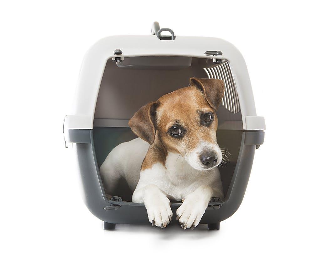 子犬を迎えたらすぐに始めたい! 愛犬のためのハウストレーニング