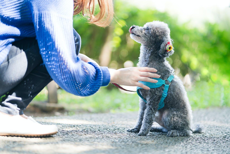 飼い主の待ての指示に従う愛犬