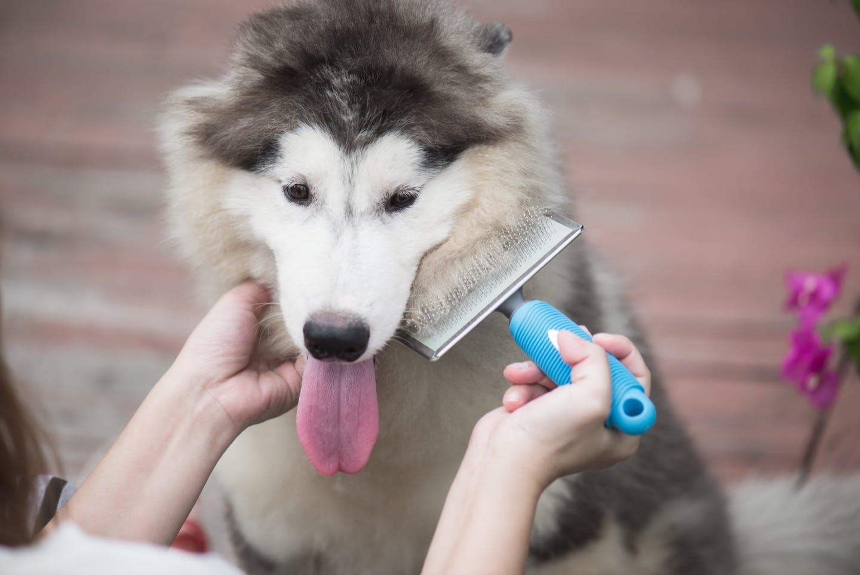 愛犬におすすめのブラシは?犬の毛の長さ別にブラシの種類を解説!