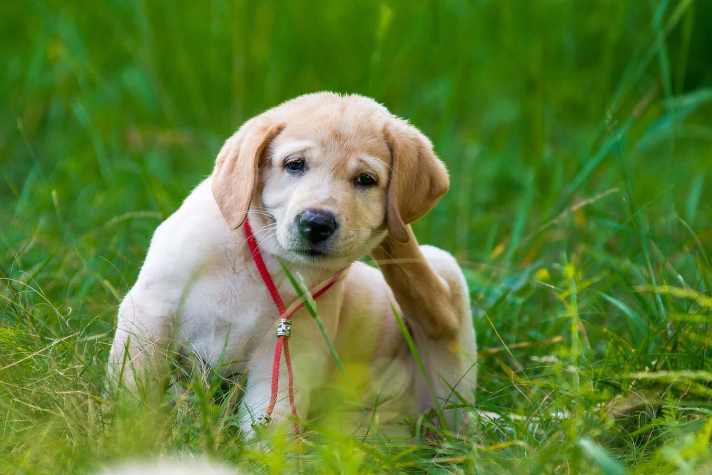 【獣医師監修】犬のノミ・マダニ対策法とは?見つけた時の対処&予防テクを紹介