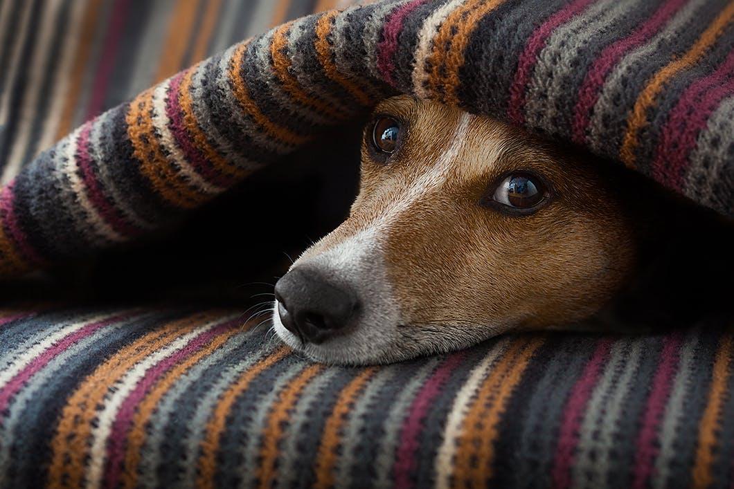【獣医師監修】犬の「がん」とは?診断されたらどうすればいい?