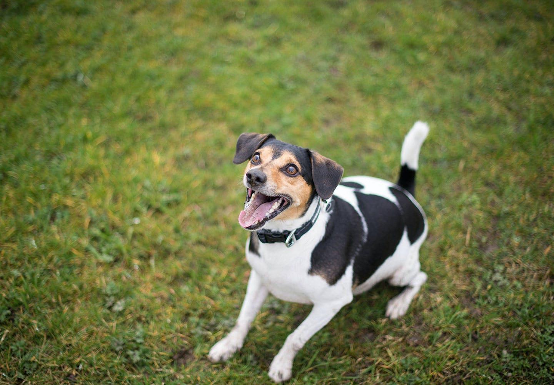 【獣医師監修】犬の鳴き声には理由がある?ワンワン!クゥーンなど鳴く意味やしつけ方についても解説