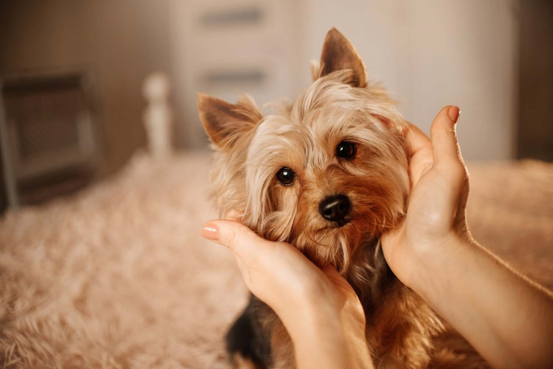 【獣医師監修】愛犬の体調を把握するために毎日チェックすべきポイントとは?【犬の健康診断】