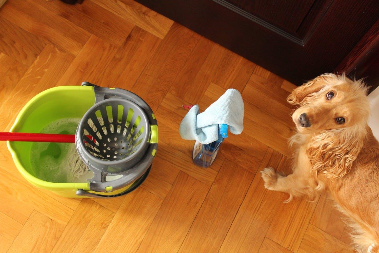 抜け毛やトイレのそそうはどう掃除する?犬用グッズのお手入れ法
