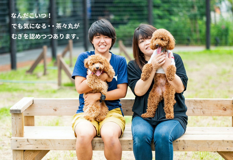 愛犬家の一日《WanScene85》 えりちゃん・はーちゃん & 茶々丸・むぎ(トイプードル)
