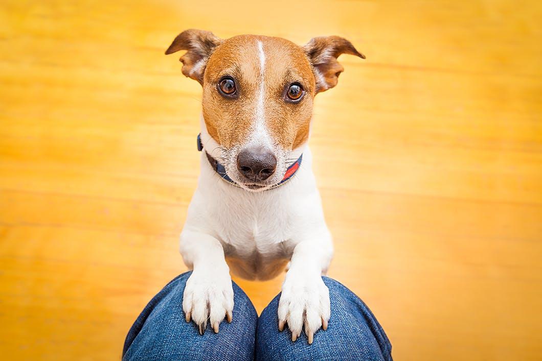 愛犬と信頼関係を築くには? 信頼されるためのポイントをご紹介
