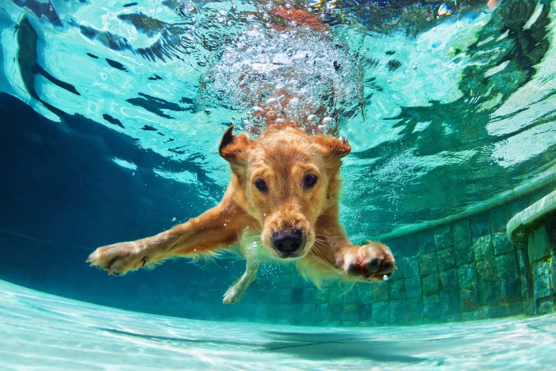 【獣医師監修】わんちゃんとの水遊びを安全に楽しむコツとは?水泳する時の基礎知識や注意点を解説