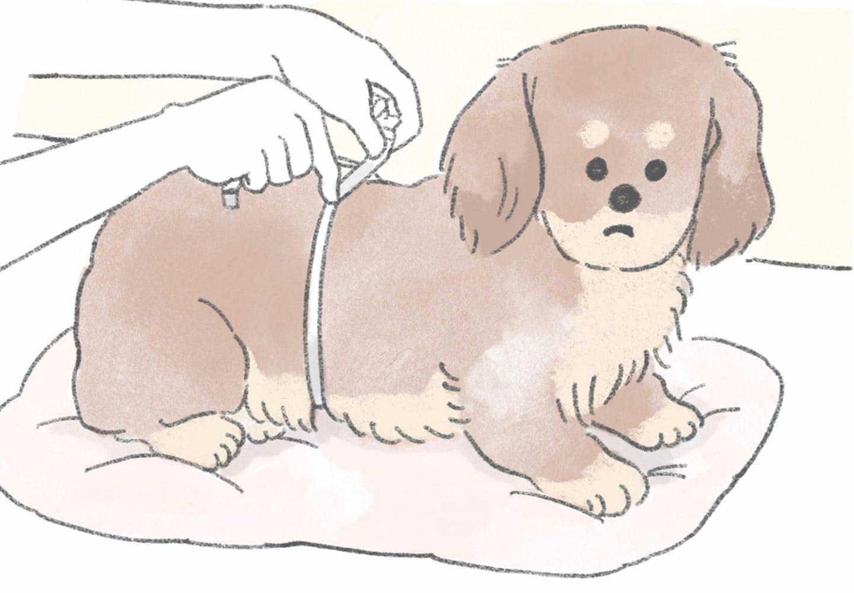 犬の服を買う前にわんちゃんのサイズをチェック!正しい測り方を教えます