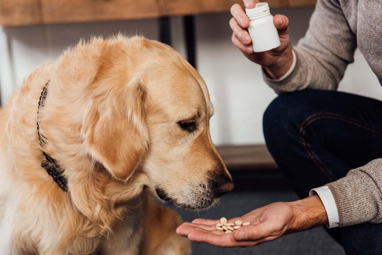 【獣医師監修】犬にサプリが必要な理由とは?上手な与え方や注意点を紹介します!