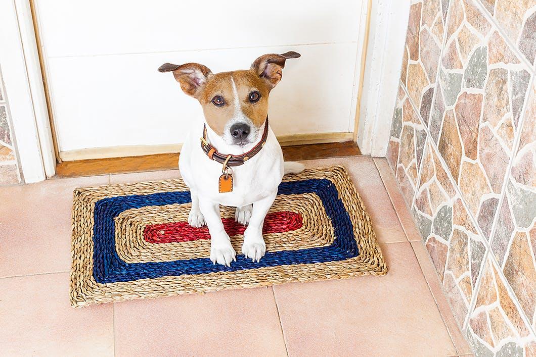 愛犬が「待て」を覚えるとこんなにいい子に! 使い方の例をご紹介