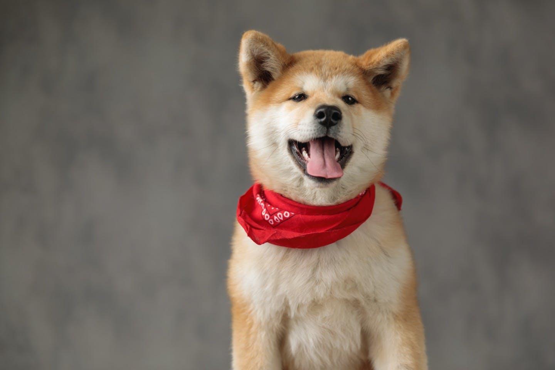 犬やペットのスペシャリストに!日本愛玩動物協会の資格&検定