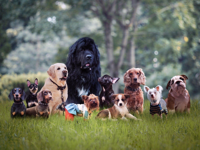 愛犬のルーツを知るのに役立つ!?犬種の「10グループ制」とは