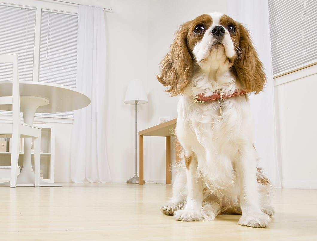 帰宅後の接し方も重要!愛犬を安心させるため留守番後にできること