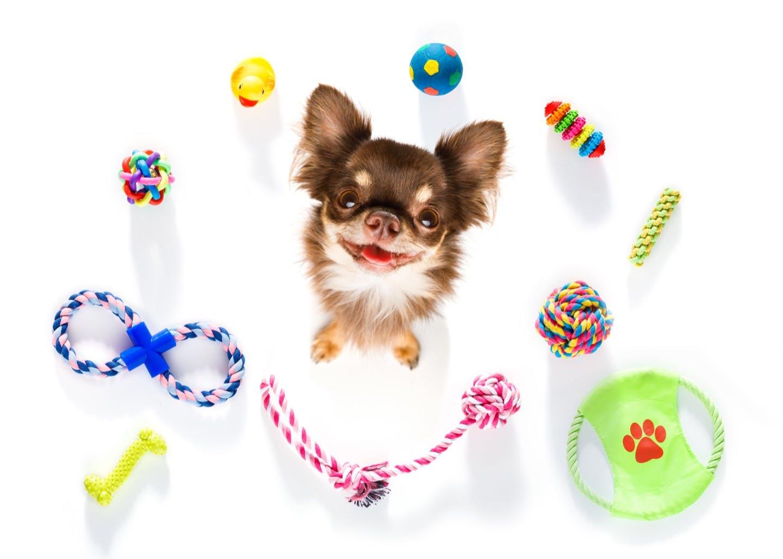 愛犬とおもちゃで遊ぼう!おすすめの遊び方&最適なおもちゃをご紹介
