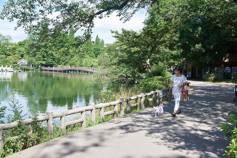 人気の住みたい街はわんちゃんにも優しい! 緑とアートを楽しみながら雑貨とカフェを巡る散歩(吉祥寺)