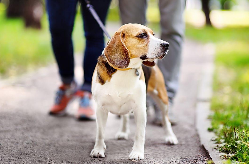 愛犬の健康寿命を延ばす3つの運動習慣(お散歩編)