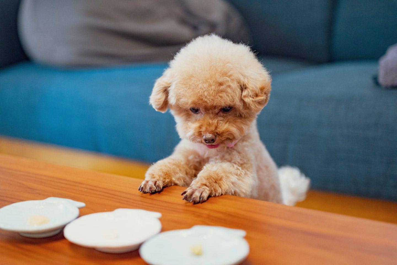 【ペットの食のプロが教える】愛犬が喜ぶおやつの選び方!