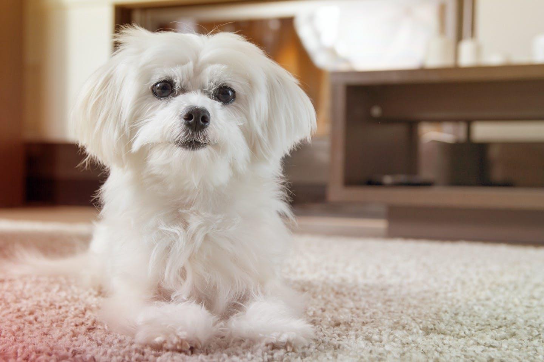 犬が留守番中トイレをしない・ごはんを食べない……心配事にアドバイス