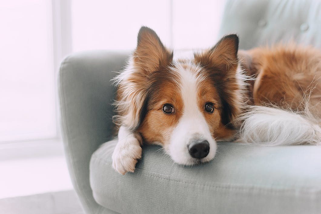 犬は目の病気になりやすい?かかりやすい犬の3つ特徴【獣医師監修】