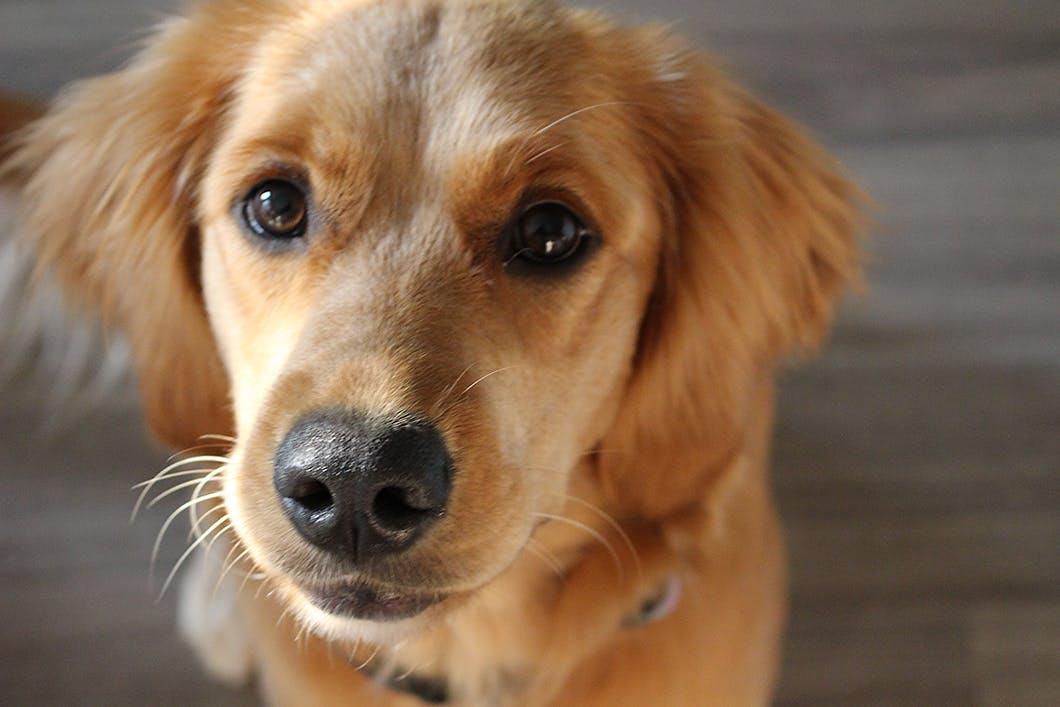 愛犬がストレスなく安心して過ごすために!留守番前にできること