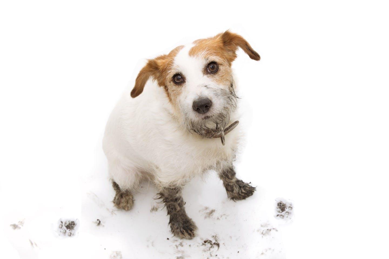 正しく拭いて病気を予防しよう!「犬の足拭き」のコツや注意点とは