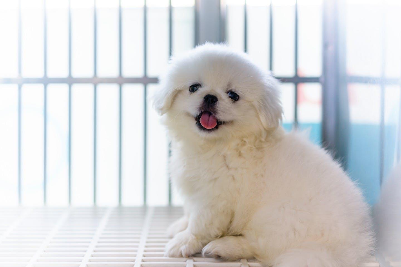 犬のクレート・サークル・ケージは何が違う? 使い分け方法も解説!