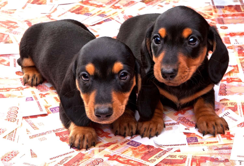 ミニチュア・ダックスフンドを飼うとどれくらいお金がかかる?獣医師が試算した生涯費用を紹介!