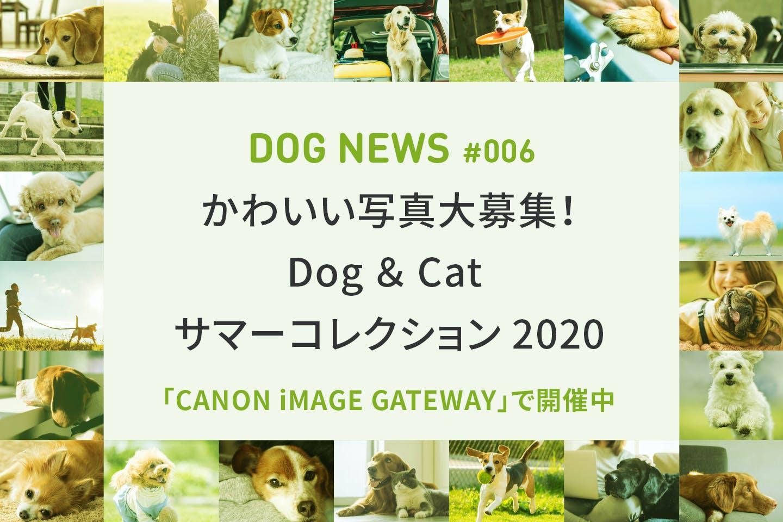 スマホ写真で参加OK!キヤノン「Dog & Cat サマーコレクション2020」