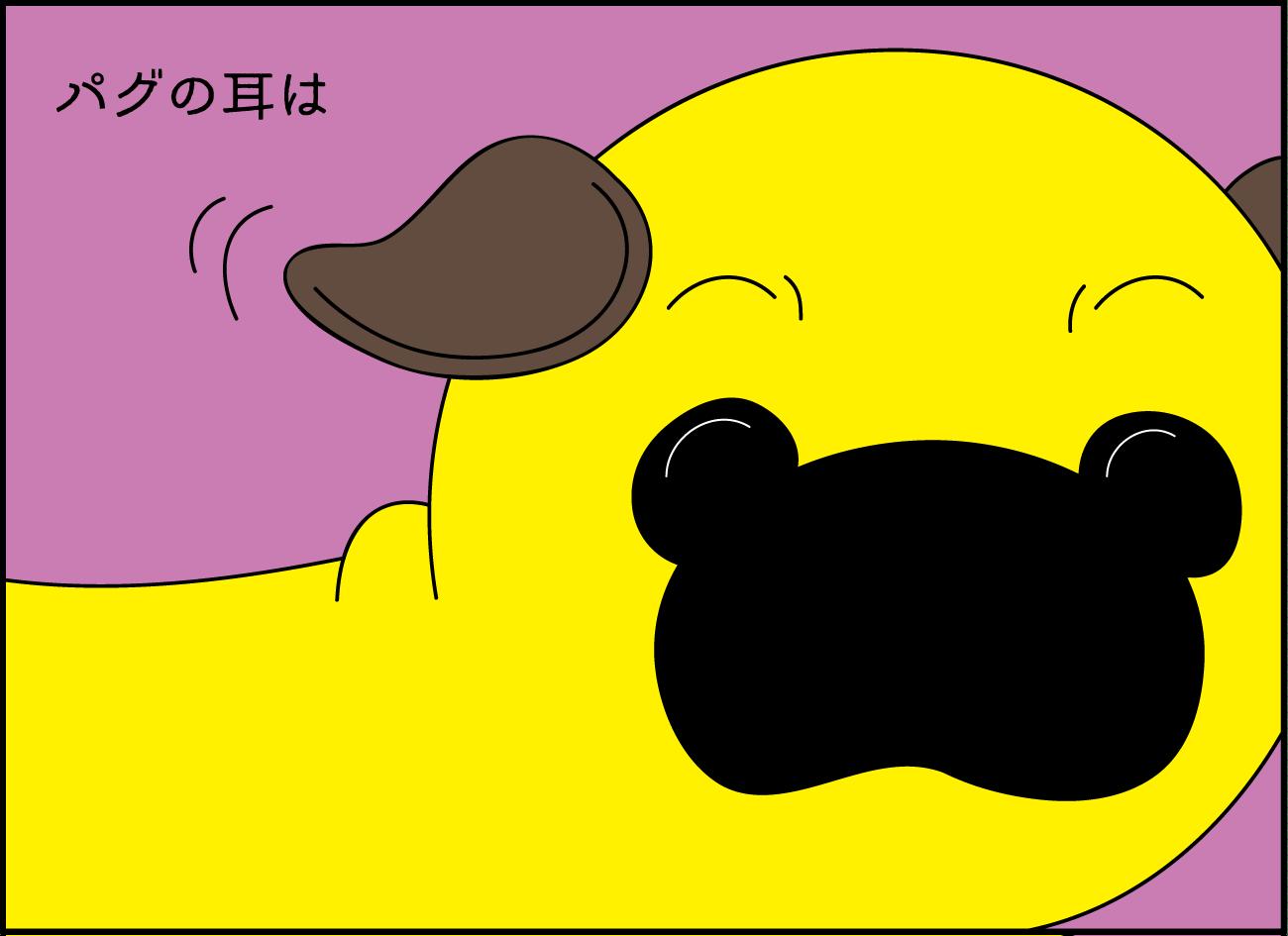 【パグとわたし】パグの耳