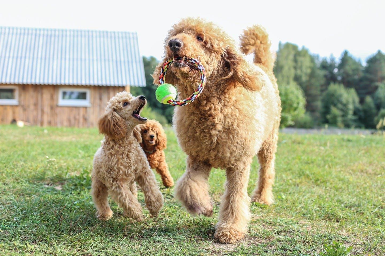 犬のDNA検査では何がわかるの?犬の遺伝子にまつわる疑問まとめ