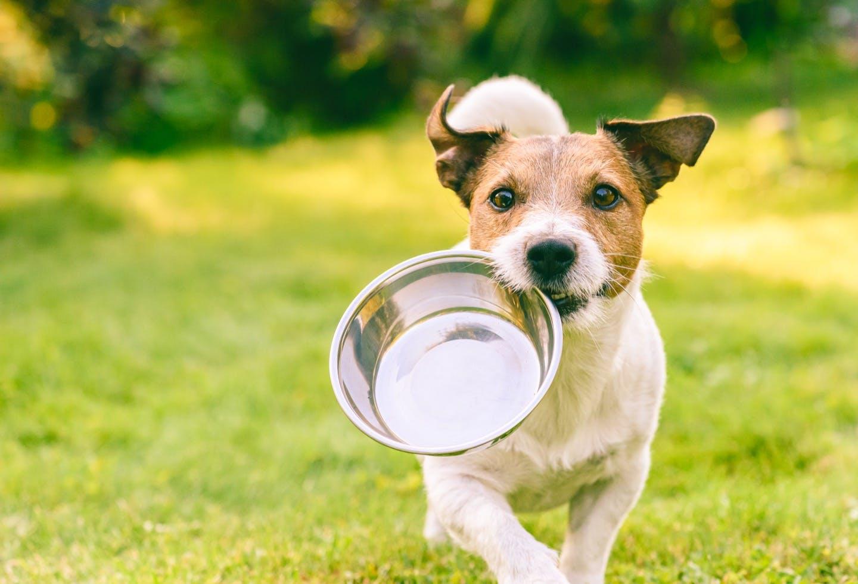 おすすめのフードボウルは?知っておきたい犬の食事グッズの選び方