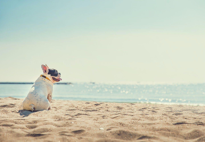 【獣医師監修】犬にも紫外線対策は必要!?紫外線の影響で起こる体の不調や病気とは?