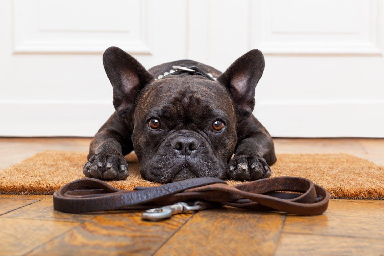 犬の首輪・ハーネス・リードの正しい選び方とは?最適なサイズを解説