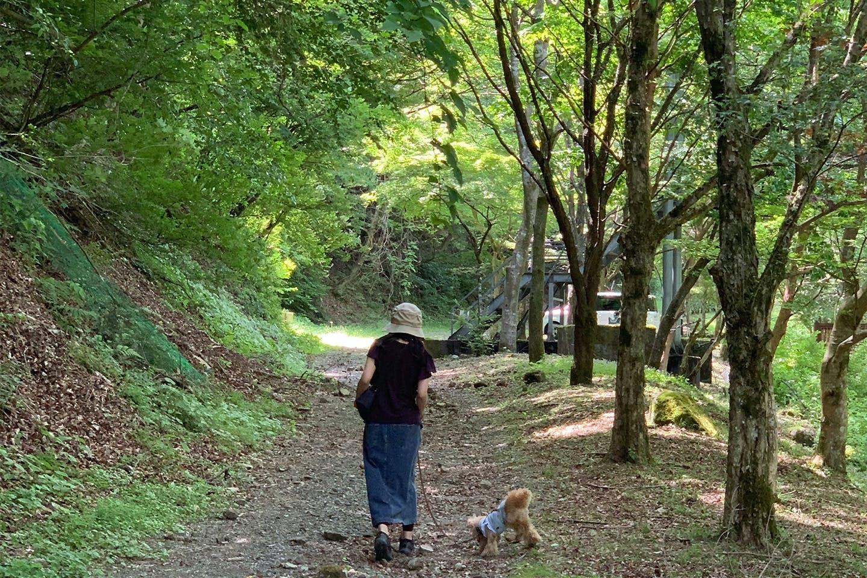 暑かったけど、林間なので気持ち良くお散歩できました