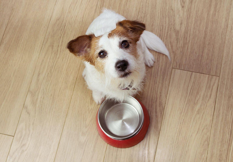 【獣医師監修】犬も健康に腸内環境が関係している?毎日の食事や生活の中で気をつけるべきポイントを解説