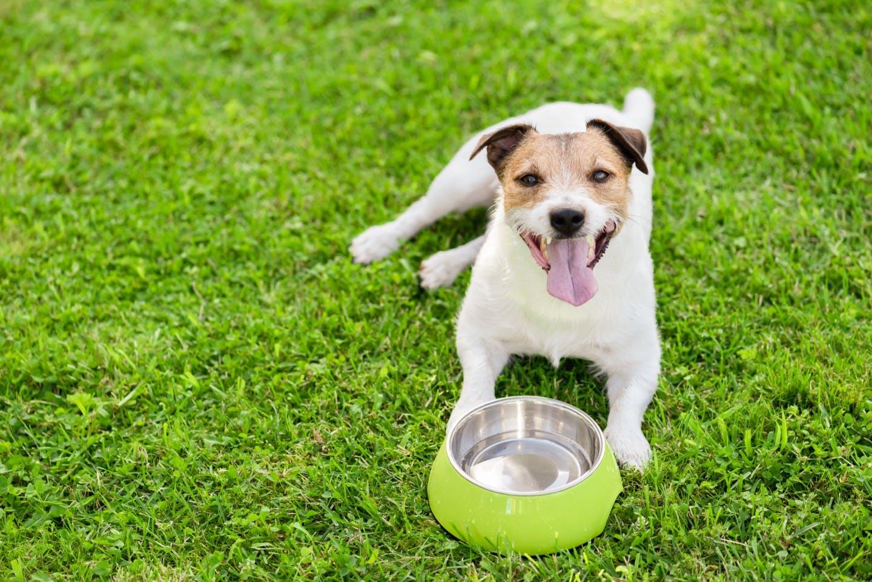 愛犬が水を飲まない理由や対処法は?犬の飲み水に関するFAQまとめ