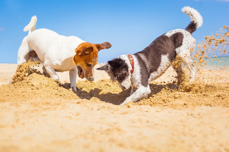 【獣医師監修】犬の熱中症対策!散歩や車の外出時の注意点。