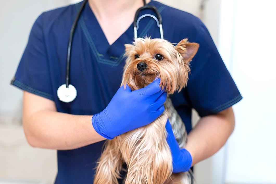 【獣医師監修】犬の膀胱炎や腎臓病の予防法って?原因・症状も解説