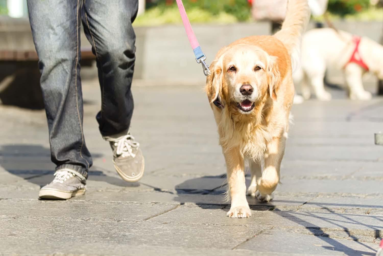 【獣医師監修】犬の散歩中でもソーシャルディスタンスを保つ方法とは?散歩時に注意すべき点を紹介!